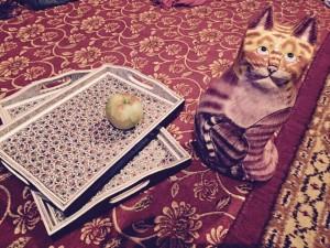 ペーパーマッシュ猫