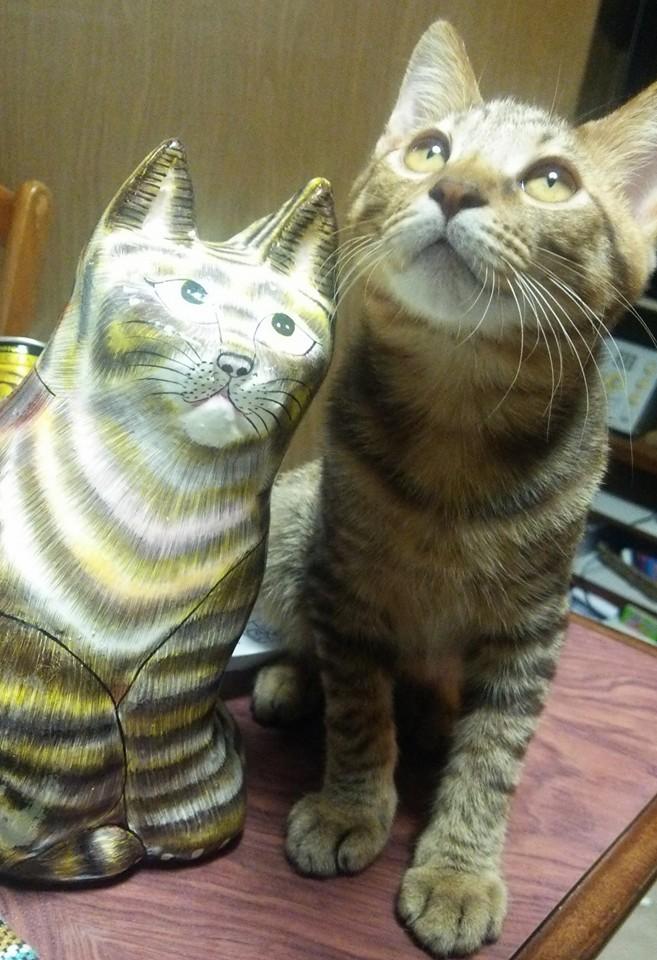 いろんな猫ちゃん揃ってます!